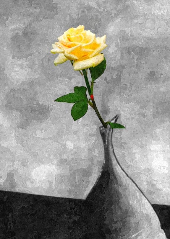 Amour de Rose. Kindler Jean-Jacques Jean-Jacques Kindler