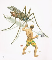 Medical Art, Malaria-Gefahr.