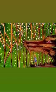 Le petit chevalier des étoiles et la grotte de l'ours.