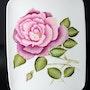 Rose Ancienne dégradé de couleurs rose fleur/arbuste feuilles vertes. K-Zi-Yak