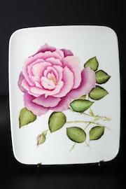 Rose Ancienne dégradé de couleurs rose fleur/arbuste feuilles vertes. K. Zi. Yak