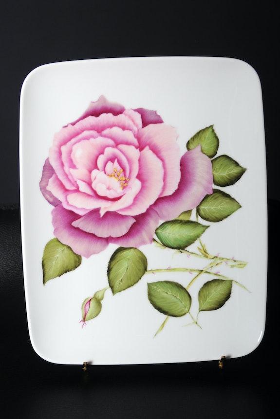 Rose Ancienne dégradé de couleurs rose fleur/arbuste feuilles vertes. K-Zi-Yak K. Zi. Yak