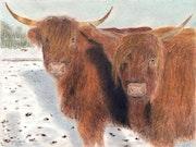 Vaches Highland.