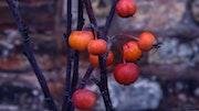 Fruits d'Hiver.