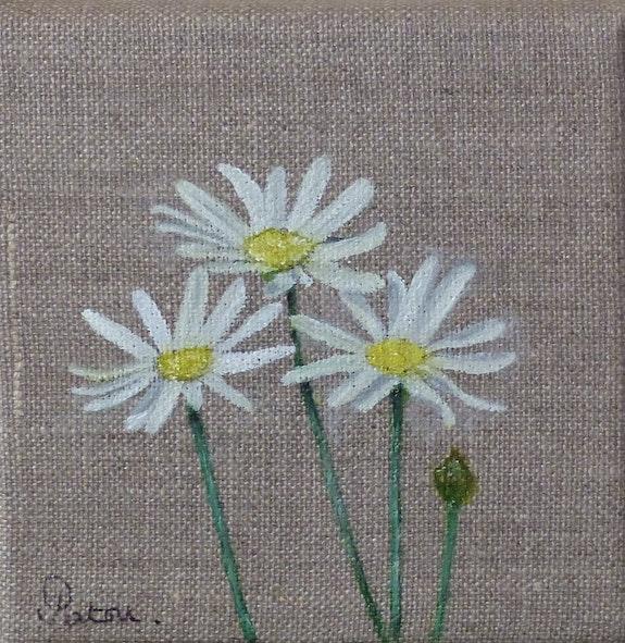 The daisies. Patricia De Chadois Patricia De Chadois