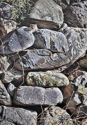 Peek a Boo - Stoat in Stone Wall by Alan m Hunt.