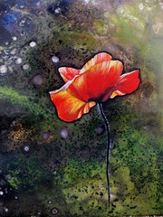 Coquelicot n°7.