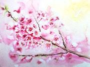 Cerisiers du Japon.