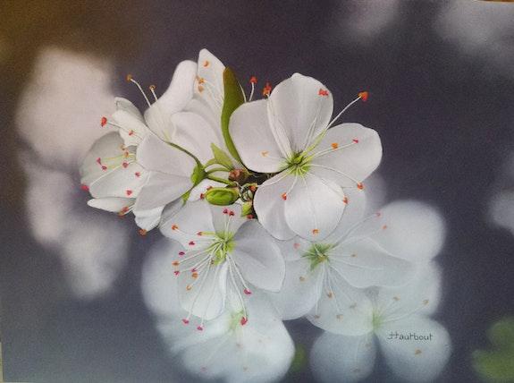 Fleurs de cerisier. Jacqueline Hautbout Jacqueline Hautbout