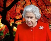 Reine rouge….