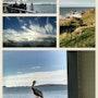 Coastal collage. Willssb