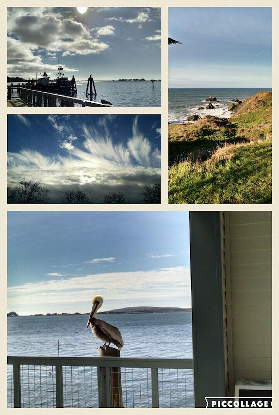 Coastal collage. Willssb