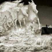 Echeveau de chevaux échevelés….