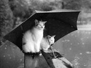 Ballade sous la pluie.