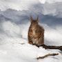L'écureuil et la neige. Andrée Duniec