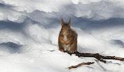 L'écureuil et la neige.