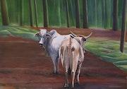 Deux vaches à Arenal Observatory lodge.