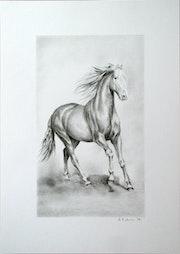 Horse 3. Hrvoje Puhalo