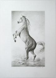 Horse 4. Hrvoje Puhalo
