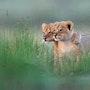 Lionceaux. Andrée Duniec
