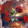 Rote Rose im Sonnenaufgang. Juste