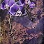 Black Orchid. Isabelle Le Pors