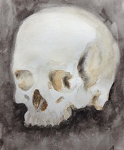 Skull Study. Dominique Dève