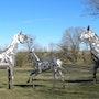 Art monumental sculpture métal groupe de chevaux. Espace Les Noisetiers -La Cavalerie-