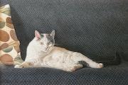 Lisy pose sur son canapé.