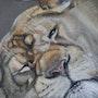 La lionne. Catherine Lccat