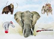 Mémoire d'éléphant.