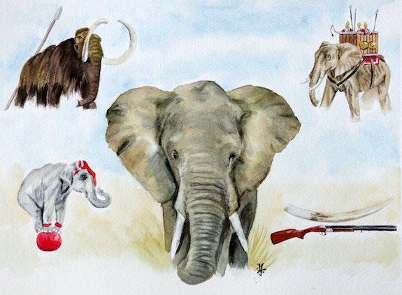 Mémoire d'éléphant. Denis Emilie Artemie