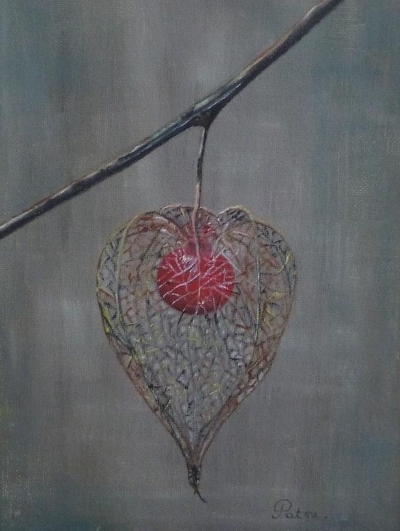 Physalis Alkekenge red lantern. Patricia De Chadois Patricia De Chadois