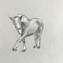 Horse Study 2. Dominique Dève