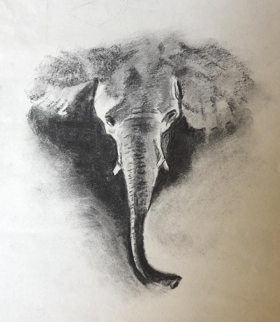 Tête d'éléphant. Julie Andrieu Julie Andrieu