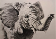 Young elephant. Tiffanie Daubié