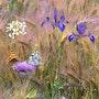 Le jardin de Claude Monet devient Champêtre. Wazaha78