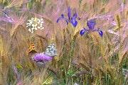 Le jardin de Claude Monet devient Champêtre.