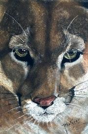 Puma. Malaver