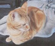 Chat qui rêve ou qui regarde.