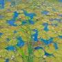 Young water lilies. Trnski Velimir