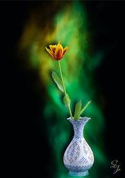 Blumenvase mit Tulpe.