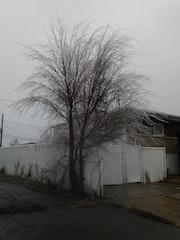Un arbre sous la pluie.