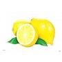 Citrons jaunes. Ig Draw