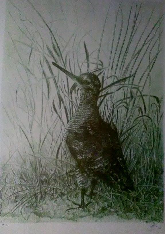 Divujo realismo de artista juan pujol rodriguez. Juan Pujol Rodriguez, Marc Contreras