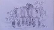 Les chevaux de trait Belges.