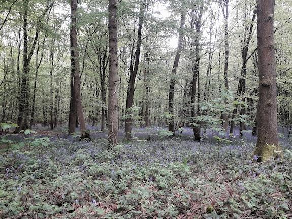 La forêt verte au Printemps. Domino Domino