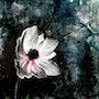 Anema, l'amoureuse du vent.. Isabelle Le Pors