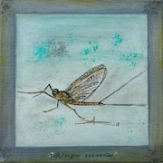 Taking the fly …. Arlette Sanz Dutheil