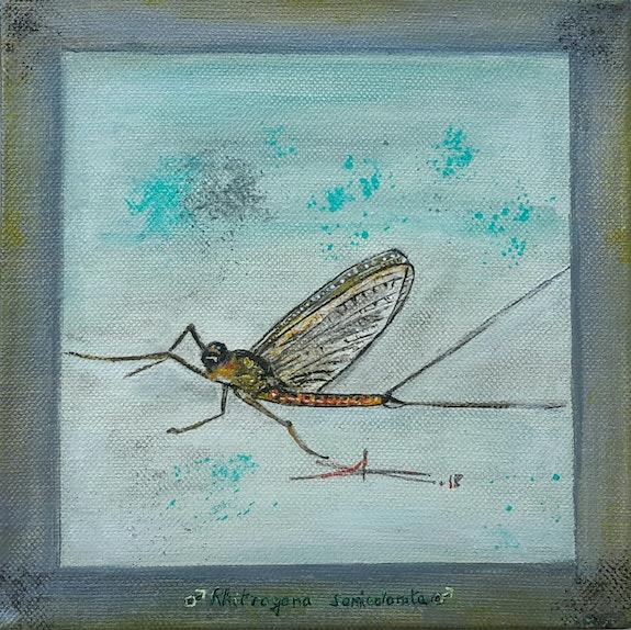 Taking the fly …. Arlette Sanz Dutheil Arlette Sanz Dutheil